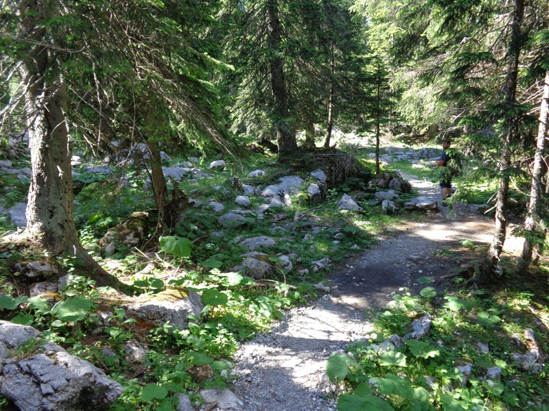 Märchenwald am Ochsenboden