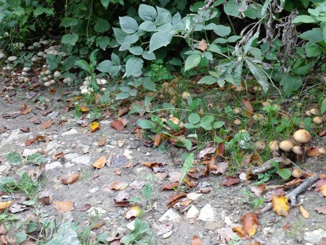 Pilze bei Neuwaldegg