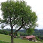 Steinkellner Hof
