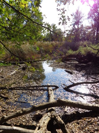 Sumpfgebiet im Prater