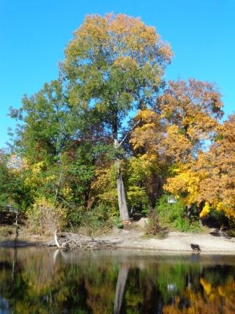Lusthauswasser im Herbst