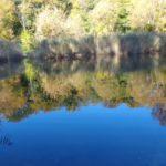Uferbereich Lusthauswasser