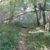 Waldweg bei Schwarzenstockallee