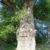 Alter Baum am Donaustrand