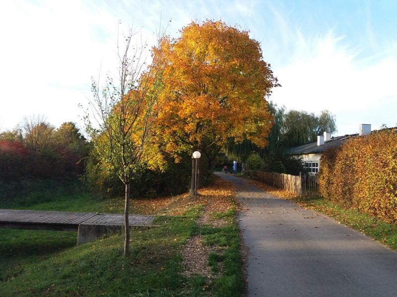 Marchfeldkanal Herbstimpressionen