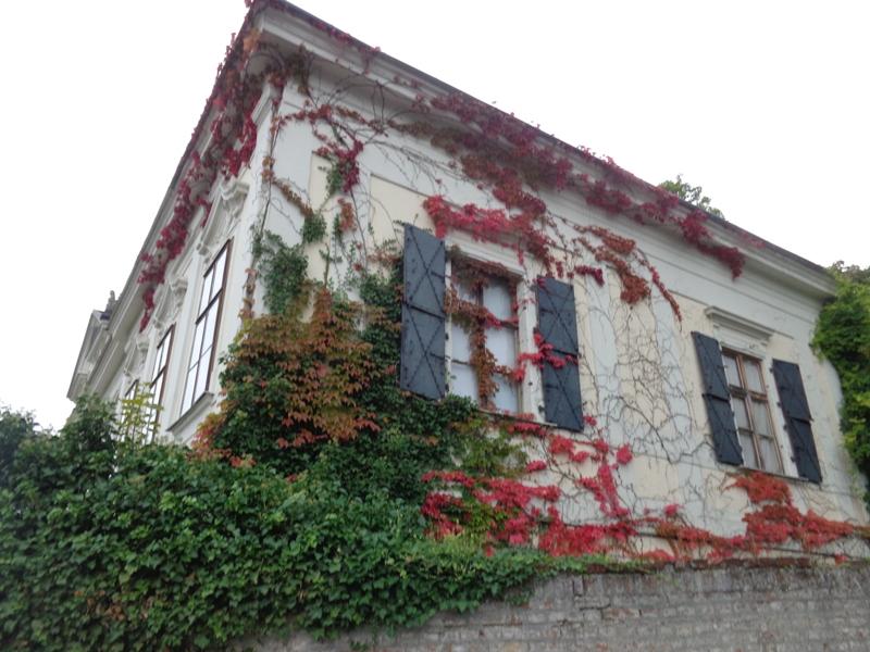 Bewachsene Fenster in Döbling