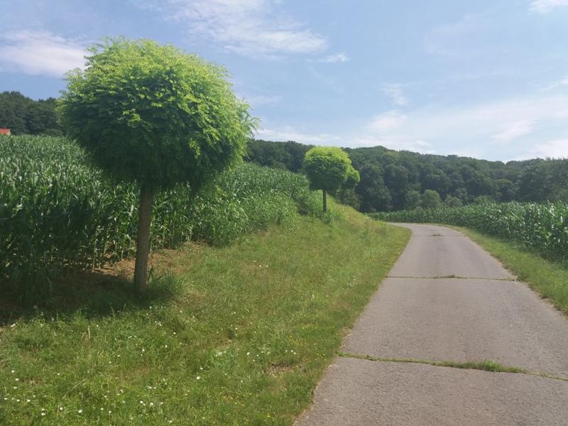 Wandern bei Poppendorf