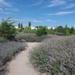 Garten der Provence