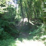 Wald bei Kühgraben