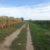 Wanderweg bei Großengersdorf