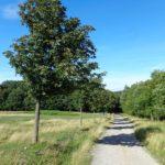 Wandern im Lainzer Tiergarten