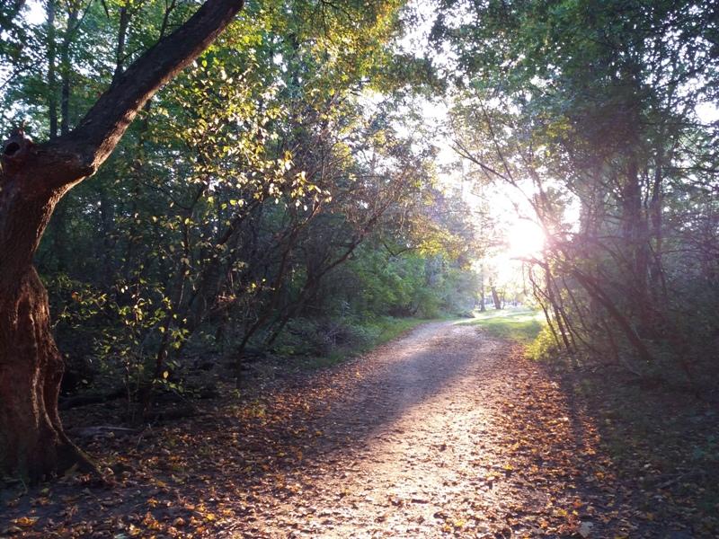 Herbst im Prater