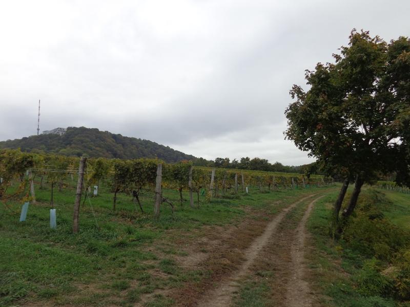 Kahlenbergerdorfer Weinwanderweg