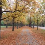 Herbstliche Prater Hauptallee