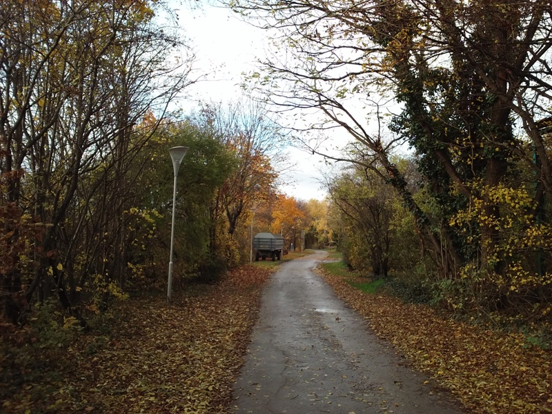 Am Marchfeldkanal im Herbst