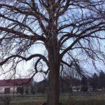 Baum in Klein Harras