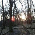 Abendsonne am Kahlenberg