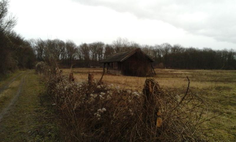 Wanderweg in der Lobau