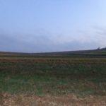 Auf'm Feld bei Klein Harras