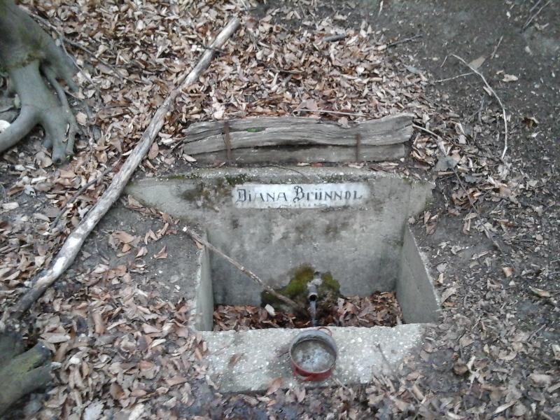 Diana Brünndl