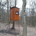 Im Hochleithenwald
