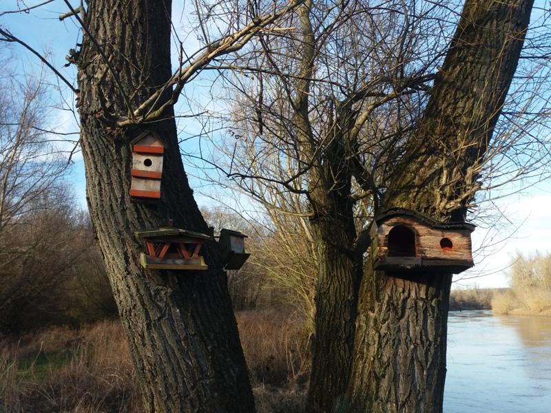Vogelhäuser an der March
