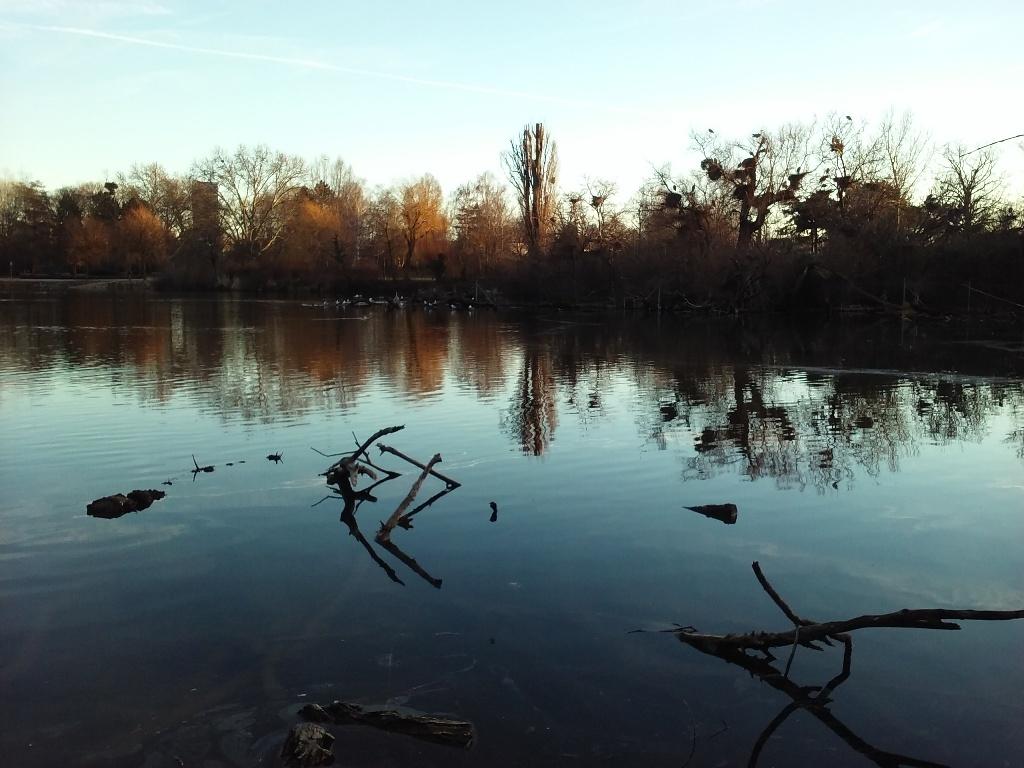 Vogelinsel im Wasserpark