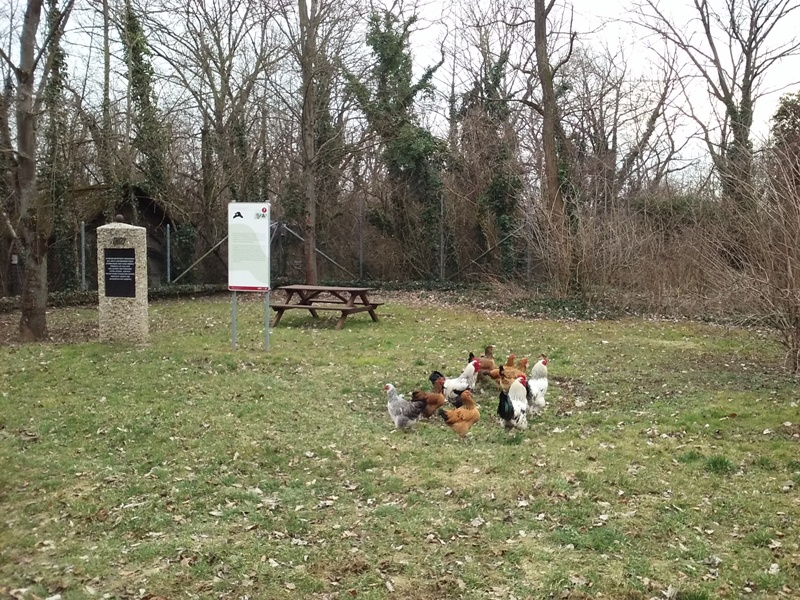 Hühner Treffpunkt