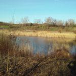 Teich am Wagram