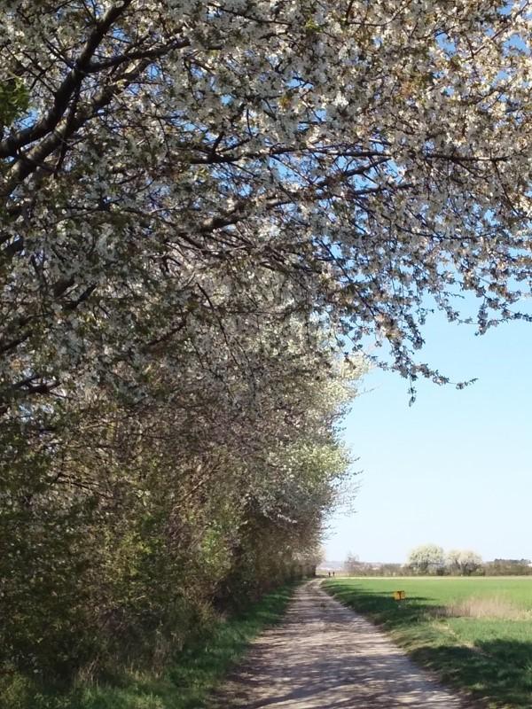 Wanderweg bei Helmahof