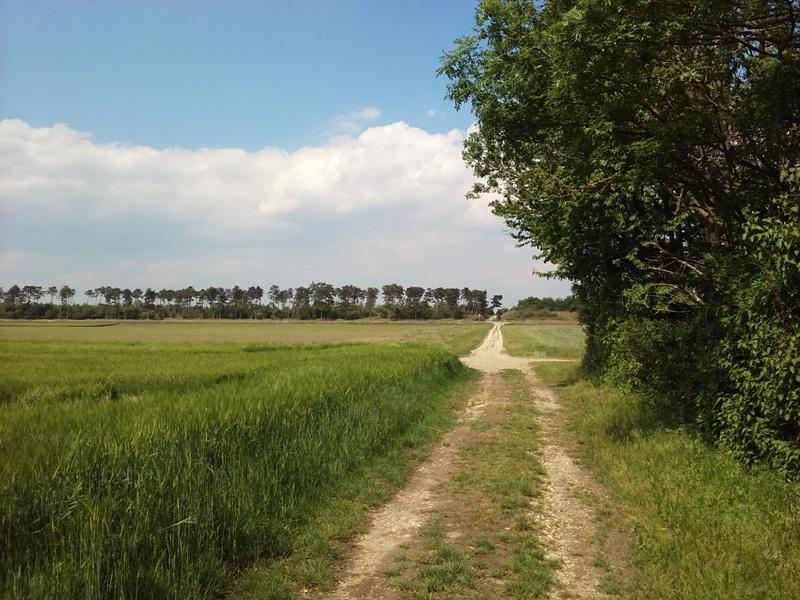 Feld am Marchfeldkanal