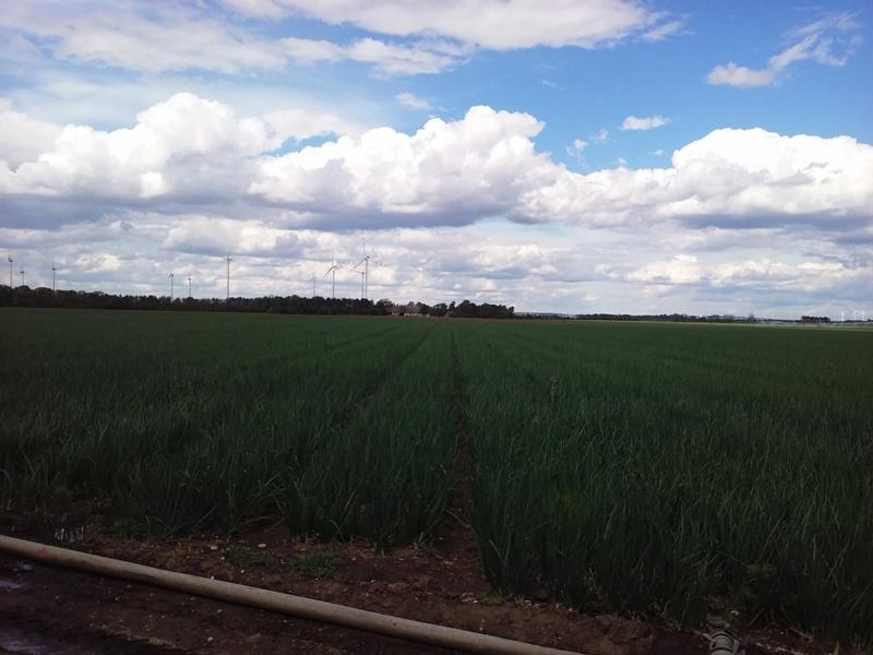Felder und Wolken