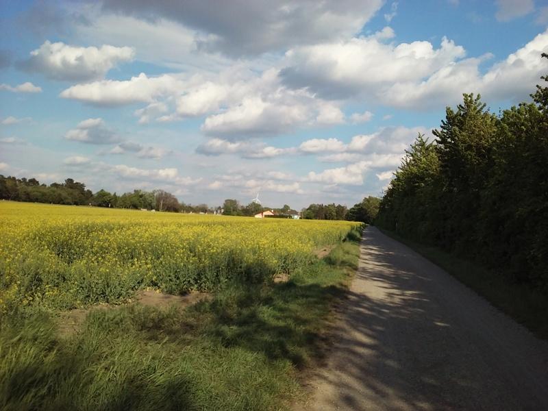 Marchfeldkanalradweg bei Parbasdorf