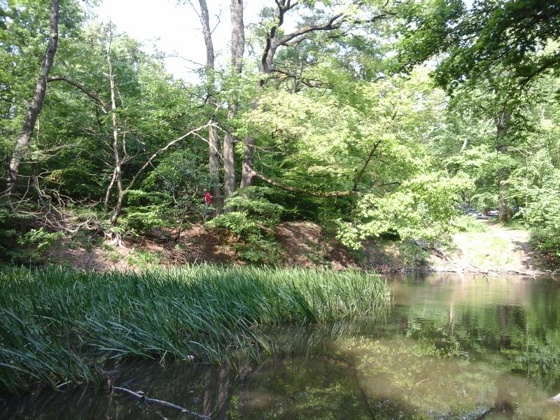 Teich am Heuberg