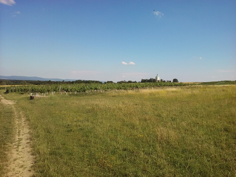 Am Feld hinterm Rochusberg