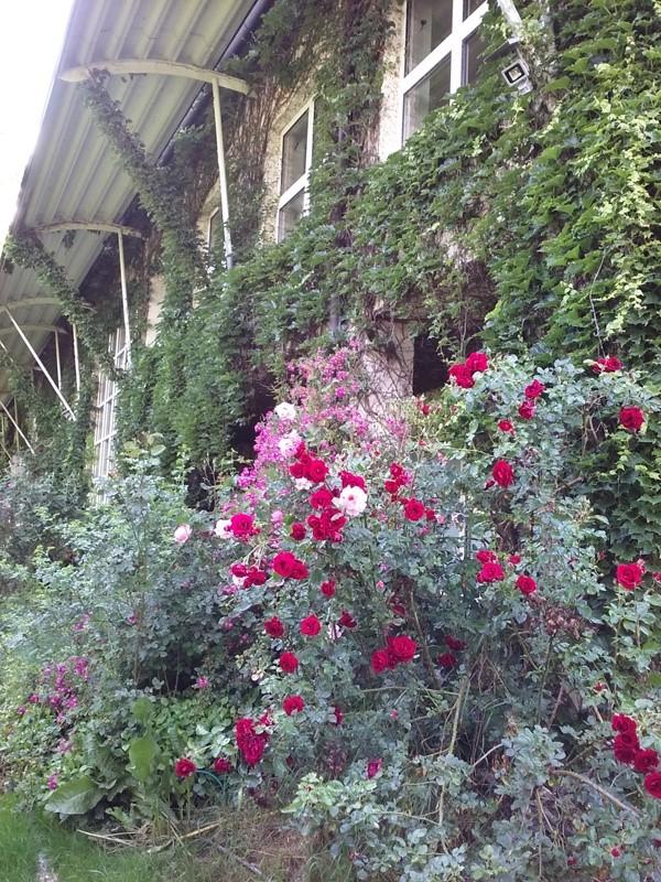 Blumen am Betriebsgebäude