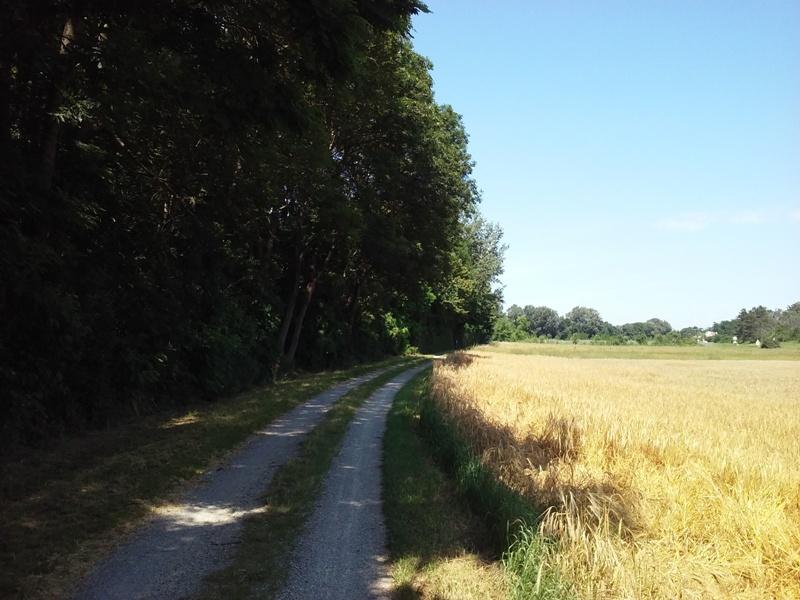 Sommer am Marchfeldkanalradweg
