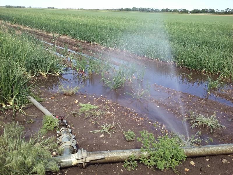 Feldbewässerung am Rußbachhof