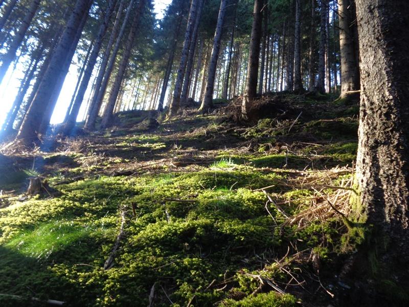 Wald bei Unterbichl