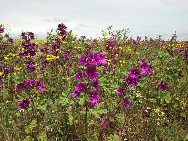 Blumenpracht bei Parbasdorf