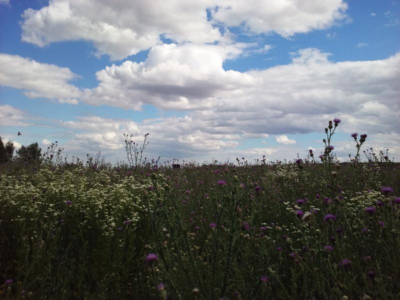 Blumenwiese am Flugfeld