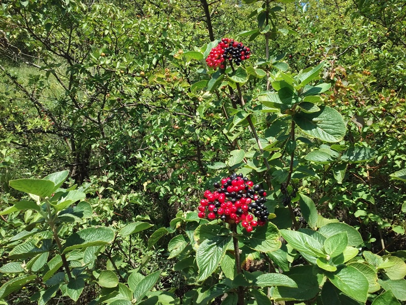 Rot Schwarz im Pflanzenreich