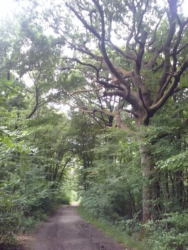 Wandern am Bisamberg