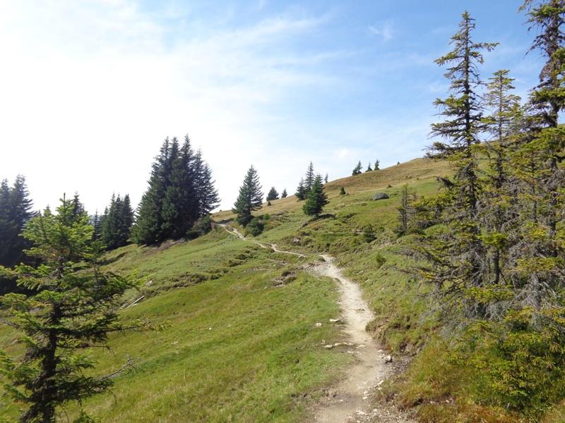 Wanderweg bei der Ellmaualm
