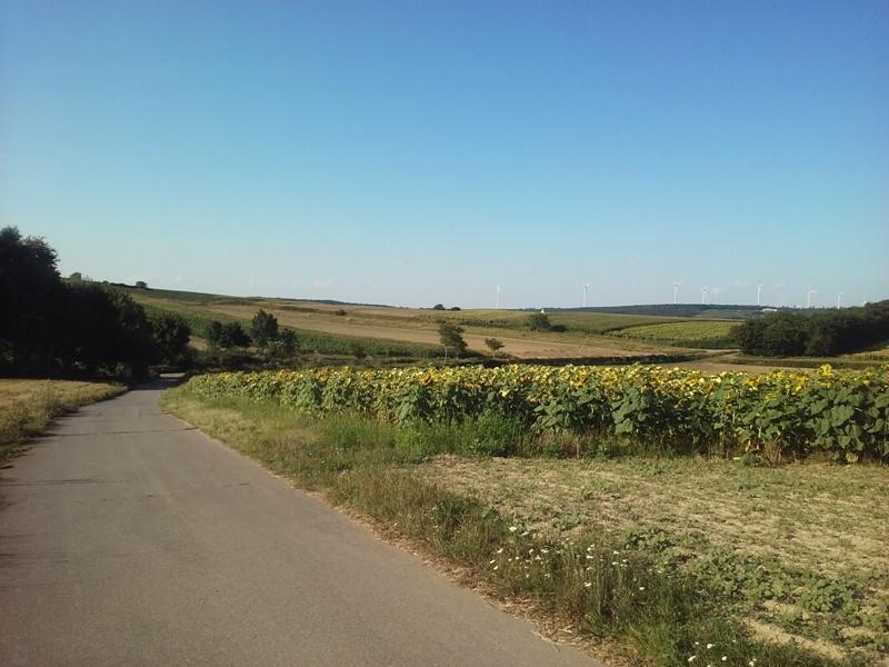 Felder bei Groß Schweinbarth