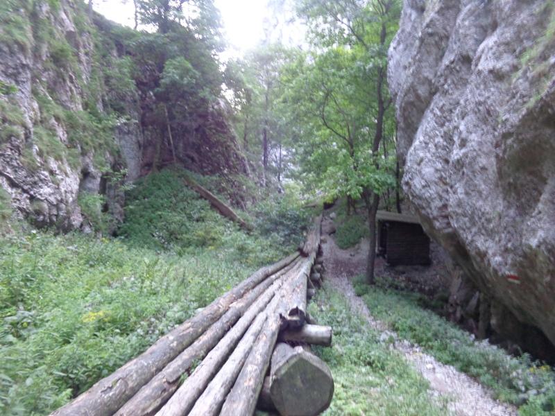Holzriese in der Eng