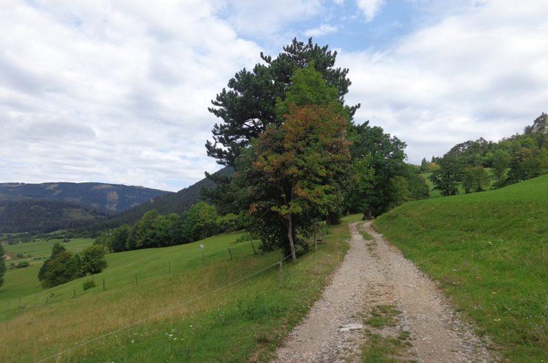 Auf dem Grünbacher Sattel