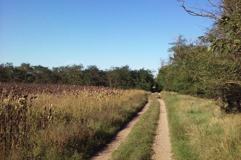 Forstweg hinter Wendlingerhof
