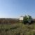 Mähdrescher bei Spannberg