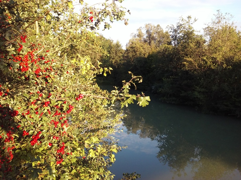 Sommerausklang am Marchfeldkanal
